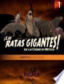 Criptozoología Oxlack   Las Ratas Gigantes De La Ciudad De México