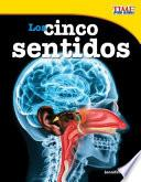 Los Cinco Sentidos (the Five Senses)
