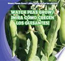 Watch Peas Grow / ¡mira Cómo Crecen Los Guisantes!